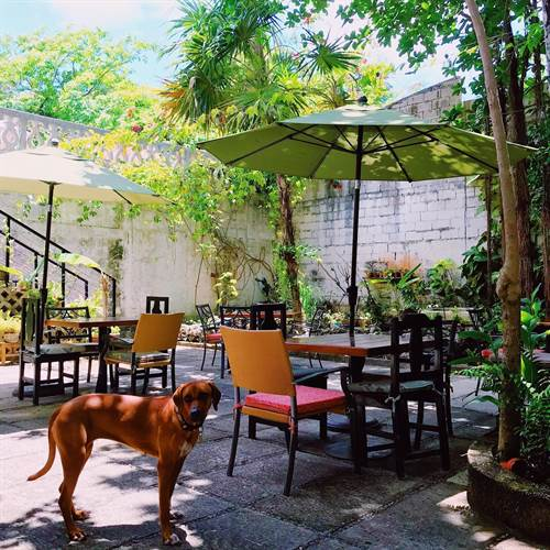 Sirena Morena Cancun Vegan restaurant outside dog
