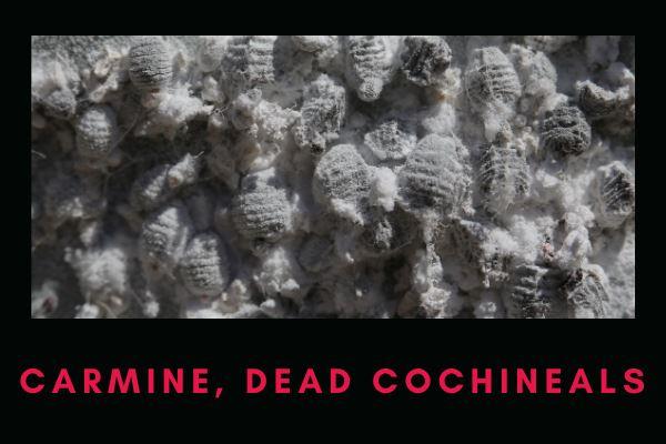 carmine, dead cochineals