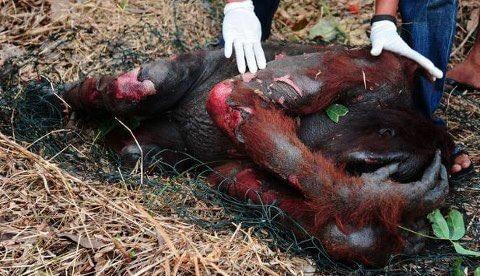 Palm Oil impact
